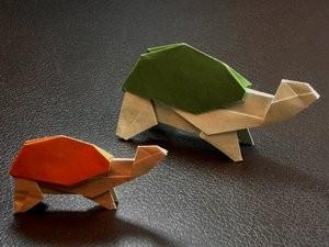Tortoise_min