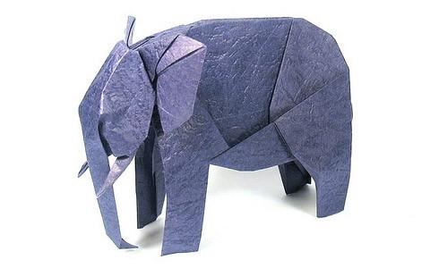 afro-slon
