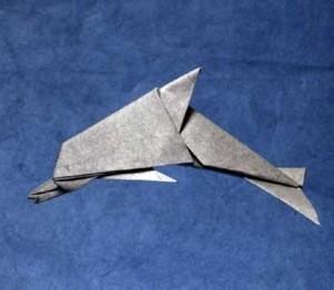 delfin-david-brill