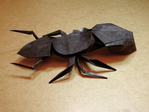 Ещё один муравей =)