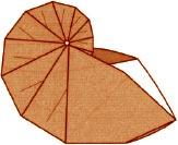nautilus-origami
