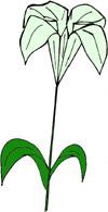 origami-liliya