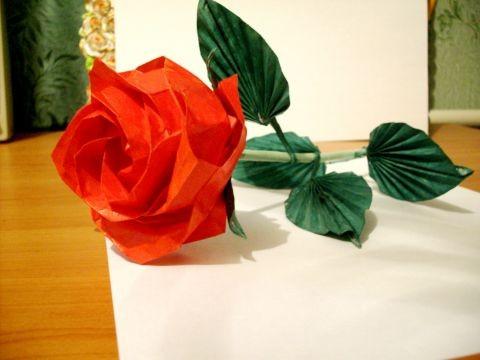 roza-kavasaki-slozhnij-variant