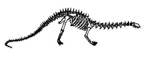 skelet-apatazavra