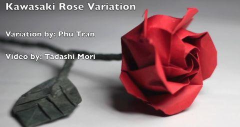 kitajskaya-krasnaya-roza